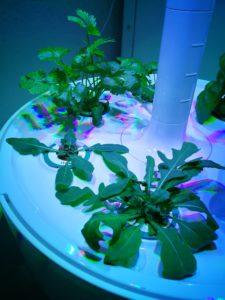 smart garden - deinen Kräutern beim Wachsen zuschauen